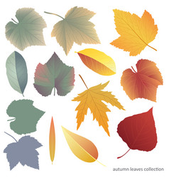 leaves collect-01 vector image