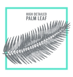 Palm leaves draw sketch vector image vector image