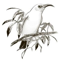 Bird Engraving vector