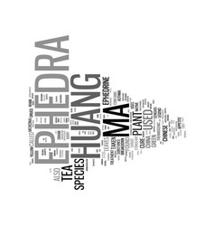 ephedra ma huang text background word cloud vector image