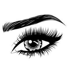Eye with long eyelashes and brows vector