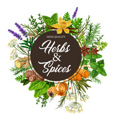 herbs and spices with frame of plants vector image