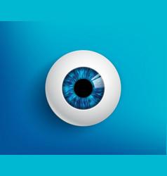 Human eyeball with a blue iris vector