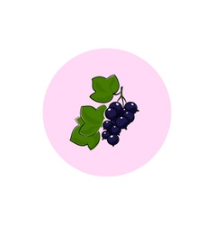 Icon Colorful Blackcurrant vector image