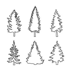 Set of conifer trees pine nature design element vector