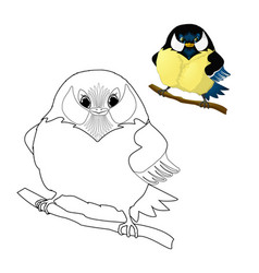 Bird - titmouse coloring for kids vector