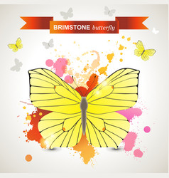 brimstone butterfly vector image