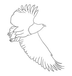 eagle line art 03 vector image