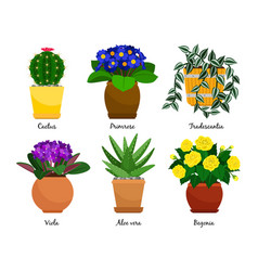 Houseplants and flowerpots vector