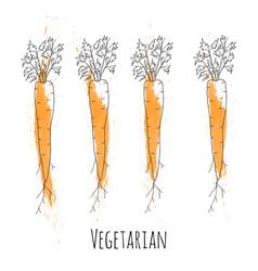 set fresh orange ripe carrots vector image