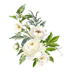 White peonies with grass vector