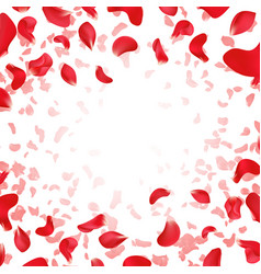 red rose falling scattered petals wedding vector image vector image