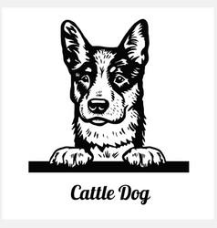 cattle dog - peeking dogs - breed face head vector image