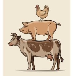 Farm animals cow pig chicken beef pork meat vector