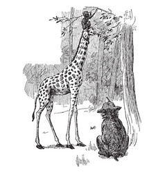 Giraffe eating leaves with a monkey sitting on vector