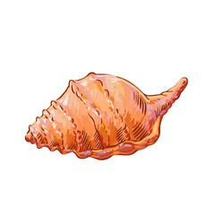 Seashell isolated rapana clam decorative picture vector