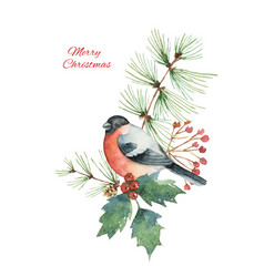 watercolor christmas bouquet with bullfinch vector image vector image