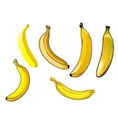 Fresh ripe yellow banana fruits vector image vector image