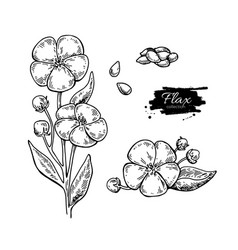 flax flower and seed superfood drawing set vector image vector image