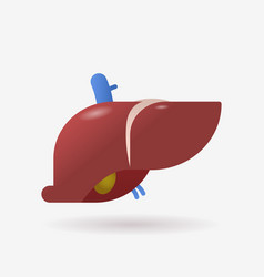 anatomical liver icon human body internal organ vector image