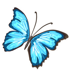 Cartoon butterfly with blue wings isolated on vector