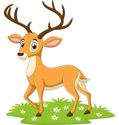 cartoon deer in grass vector image