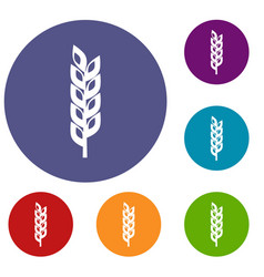 Grain spike icons set vector