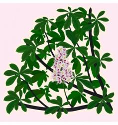 Horsechestnut blossoms vector