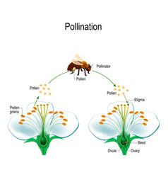 Process of cross-pollination using an animal vector