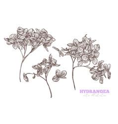 sketch hand drawn hydrangea set vector image