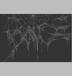 white spiderweb on black background vector image