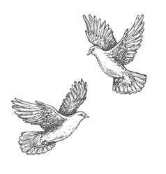 doves sketch vector image vector image