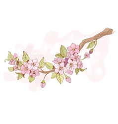 Sakura cherry branch vector image