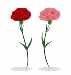 two carnations vector image vector image