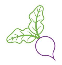 beet leaves vegetable fresh diet food vector image vector image