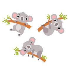 cute koalas character set vector image