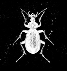 hand drawn giant violet beetle mystic ento vector image