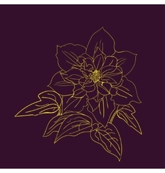 Terry flower clematis sketch vector image