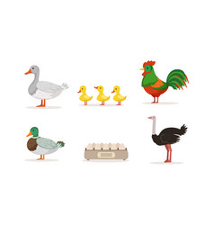 various breeds poultry set goose rooster vector image