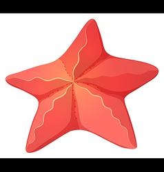 A starfish vector image