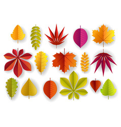paper cut beautiful color autumn leaves vector image