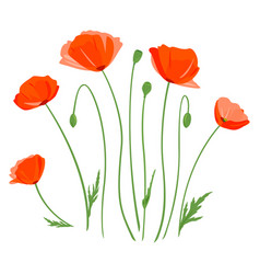 Set poppy flowers isolated vector