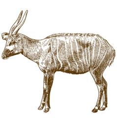 Engraving drawing bongo antelope vector