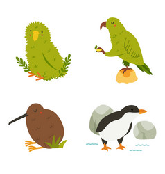 Set new zealand birds kea kakapo kiwi penguin vector