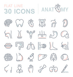 Set of line icons of anatomy and physiology vector