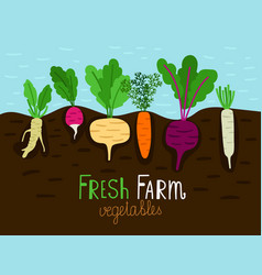Vegetables garden growing vector
