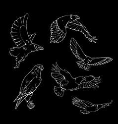 hand-drawn pencil graphics birds of prey set vector image vector image