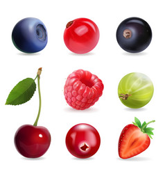 sweet berries realistic set vector image