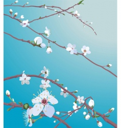 blossom background vector image vector image