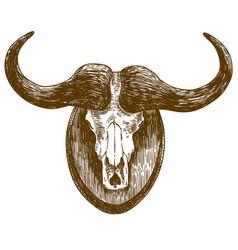 Engraving drawing buffalo skull vector